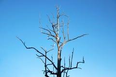 Gałąź suchy drewniany bojler i niebieskie niebo Zdjęcia Royalty Free
