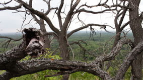 Gałąź susi nieżywi drzewa Srogi klimat Drzewa umierają Nieżywi drzewa w lasowej Mistycznej bajki atmosferze zdjęcie wideo