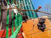 Gałąź susi winogrona zdjęcie royalty free