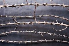 gałąź suszą metalu tekstury cierń obrazy royalty free