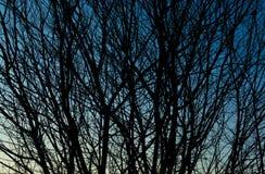Gałąź tła abstrakcjonistyczna tekstura Fotografia Royalty Free