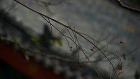 Gałąź Trząść zanim dach, Zdewastowany i osamotniony zdjęcie wideo