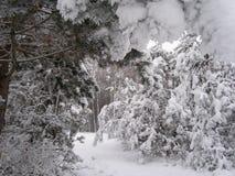Gałąź w śniegu zdjęcie stock