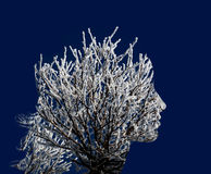 Gałąź w śniegu, krzak, jak kobieta profil podwójny narażenia Obrazy Royalty Free