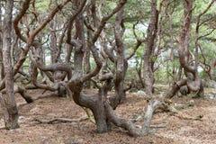 Gałąź w lesie zdjęcia royalty free