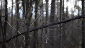 Gałąź w mglistym zimnym ranku zdjęcie wideo