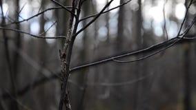 Gałąź w mglistym zimnym ranku zbiory wideo