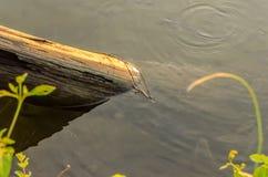 Gałąź w wodzie zdjęcie stock