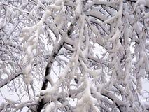 Gałąź w zimie, zakrywającej w gęstym śniegu zdjęcie stock