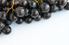 Gałąź winogrona z przestrzenią dla teksta,  Obrazy Stock