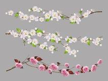 Gałąź, wiosna kwitnie wektoru set royalty ilustracja