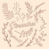 Gałąź Wręczają Patroszonego Kwiecistego Doodle Nieociosane rośliny ilustracji