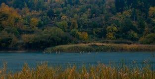 Gałąź wynika powierzchnię jeziorny Tsivlos zdjęcia stock
