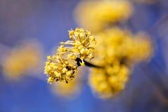 gałąź z żółtym kwiatem Zdjęcie Royalty Free
