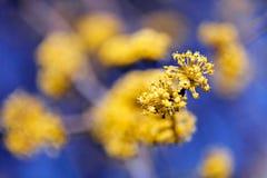 gałąź z żółtym kwiatem Obrazy Royalty Free