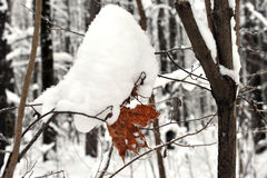 Gałąź z żółtymi liśćmi pod śnieżną zimą Zdjęcie Royalty Free