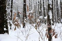 Gałąź z żółtymi liśćmi pod śnieżną zimą Zdjęcie Stock