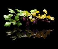 Gałąź z agrestowymi jagodami odizolowywać na czerni Obrazy Royalty Free