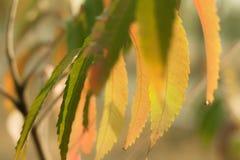Gałąź z jaskrawymi liśćmi Fotografia Royalty Free