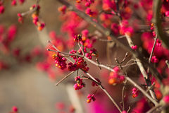 Gałąź z jaskrawymi różowymi kwiatami Obraz Royalty Free