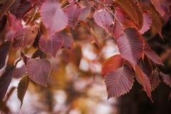 Gałąź z jesień liśćmi obrazy stock