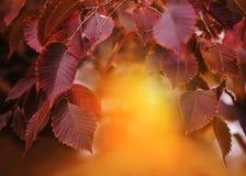 Gałąź z jesień liśćmi obraz stock