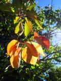 Gałąź z jesień liśćmi przy słonecznym dniem fotografia royalty free