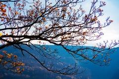 gałąź z kolorów żółtych liśćmi przeciw niebu Obrazy Royalty Free