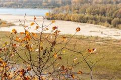 Gałąź z kolorem żółtym opuszcza przy rzecznym tłem w jesieni Zdjęcia Stock