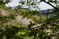 Gałąź z liśćmi Zdjęcia Royalty Free