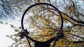 Gałąź z liśćmi i niebem przez koszykówki dzwonią Obrazy Royalty Free