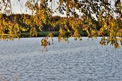 Gałąź z liśćmi nad woda fotografia stock