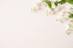 Gałąź z malutkimi białymi kwiatami Obrazy Royalty Free