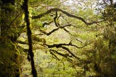Gałąź z mech, tropikalnego lasu deszczowego Milford ślad Zdjęcia Royalty Free