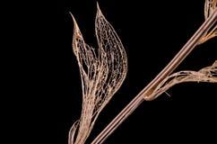 Gałąź z nieboszczyków liśćmi Obraz Stock