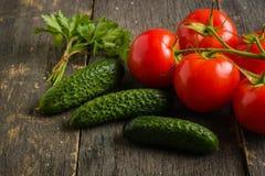 Gałąź z pięć dojrzałymi czerwonymi pomidorami Krople woda na dojrzałych owoc Zieleń bagażnik i liście Zdjęcia Royalty Free