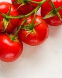 Gałąź z pięć dojrzałymi czerwonymi pomidorami Krople woda na dojrzałych owoc Zieleń bagażnik i liście Obraz Royalty Free