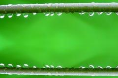 Gałąź z rosa kropel zamknięty up Zdjęcia Stock