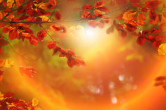 Gałąź z ulistnienie czerwonym bukiem w jesieni zdjęcie royalty free