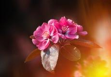 Gałąź z wiosna kwiatów okwitnięciami Obraz Royalty Free