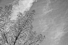 Gałąź z złotymi liśćmi na tle błękitna jesień zdjęcia stock
