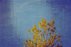 Gałąź z złotymi liśćmi na tle błękitna jesień obrazy stock