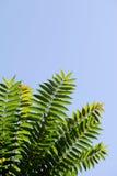 Gałąź z zielonymi liśćmi Zdjęcia Royalty Free