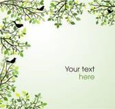 Gałąź z zielonymi liśćmi i ptakami Obraz Royalty Free