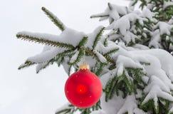 Gałąź zakrywać z śniegiem z boże narodzenie ornamentem jedlinowy drzewo Zdjęcie Stock