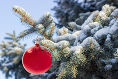 Gałąź zakrywać z śniegiem z Bożenarodzeniowymi ornamen błękitna świerczyna Zdjęcia Royalty Free