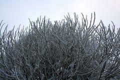 Gałąź zakrywać z hoarfrost Piękną białą zimą Zdjęcie Stock