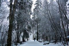 Gałąź zakrywać z hoarfrost Piękną białą zimą Obraz Stock