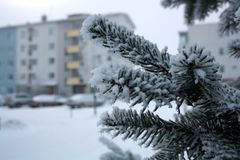 Gałąź zakrywać z hoarfrost Piękną białą zimą Fotografia Royalty Free