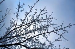 Gałąź zakrywać z hoarfrost Piękną białą zimą Zdjęcie Royalty Free